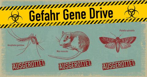Gefahr Gene Drive; ausgerottete Mücken, Nager und Kohlschaben